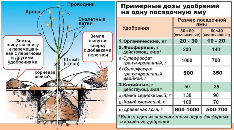 Как правильно удобрить почву для посадки вишневого дерева