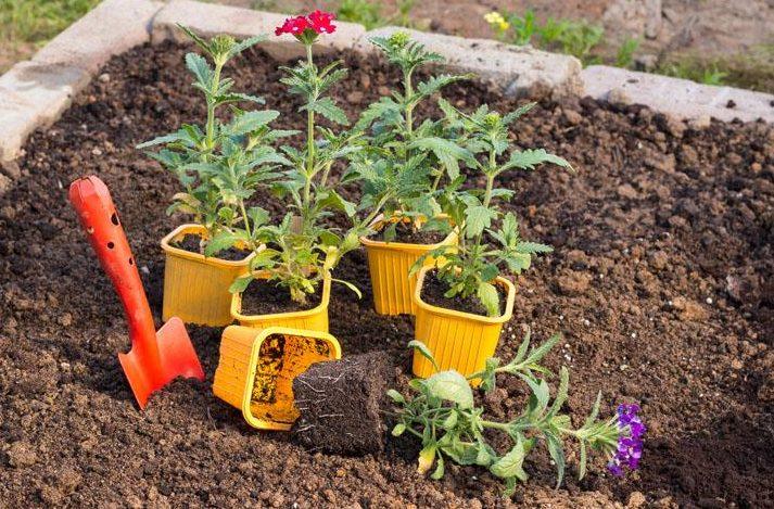 Когда и как пересаживать рассаду в открытый грунт