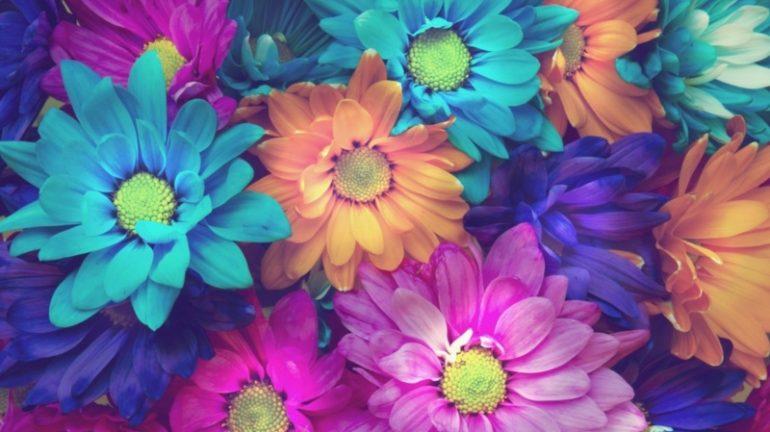 Разноцветные ромашки в саду
